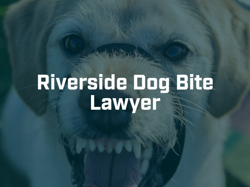 Riverside dog bite lawyer